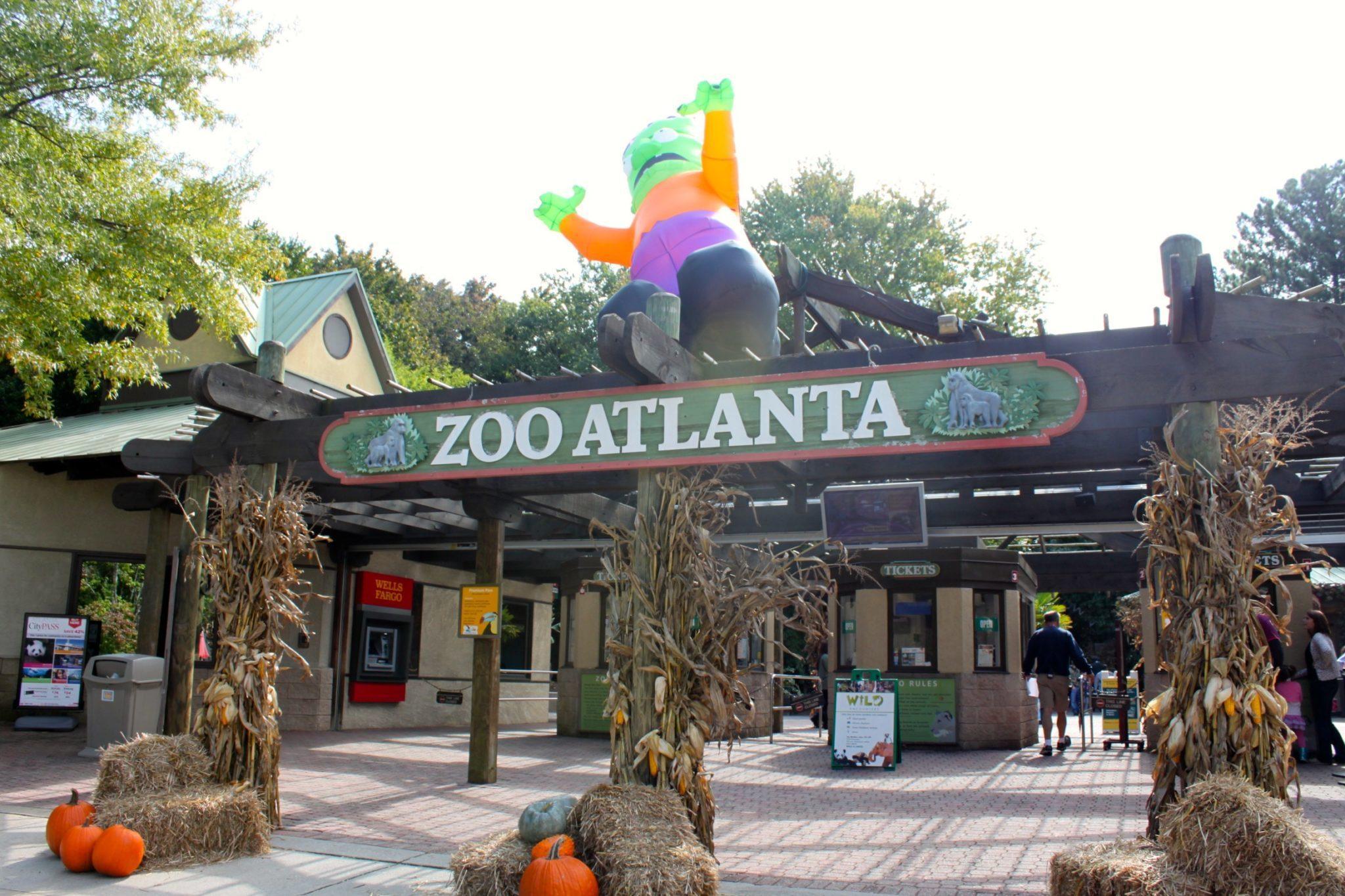 Visiting Zoo Atlanta This Is My South