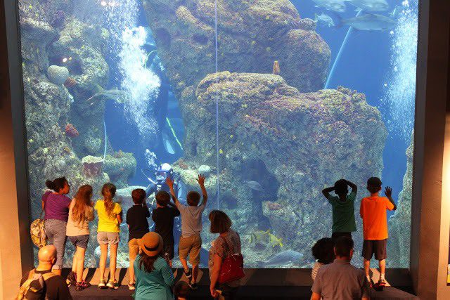Visiting The South Carolina Aquarium This Is My South
